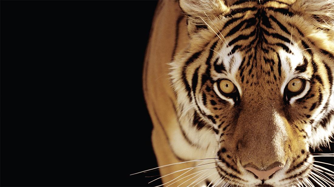 Tiger Group Services - Asset Appraisals, Liquidations, Dispositions